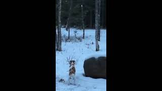 Bigfoot Encounter on Christmas 2014 in Northern Minnesota