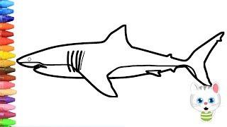 Pagina di colorazione squalo | Come disegnare e colora per i bambini