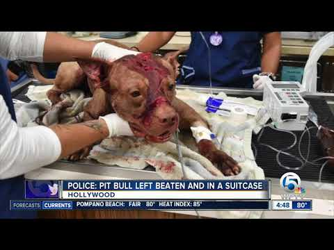 Dog stabbed, beaten left in a Broward County suitcase