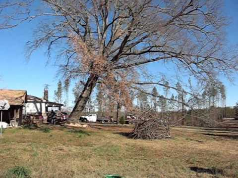 how to tell if an oak tree is dying