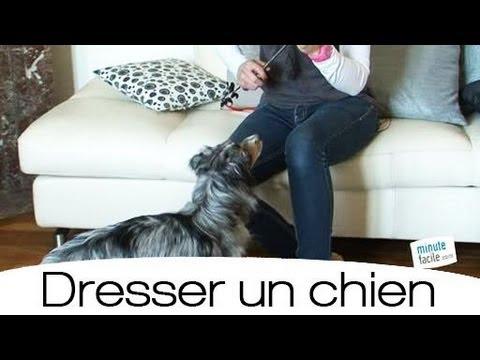 apprendre votre chien se coucher doovi. Black Bedroom Furniture Sets. Home Design Ideas