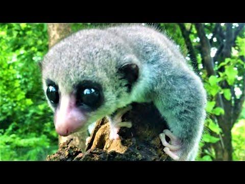 11 Amazing New Animal Species
