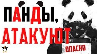 Панды не кунг фу. Самые смешные видео о животных.