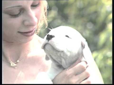 Le Dogue Argentin - YouTube