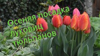 Тюльпаны. Посадка тюльпанов осенью. Маленькие хитрости!!