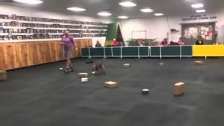 Packerland Kennel Club - Nose Work