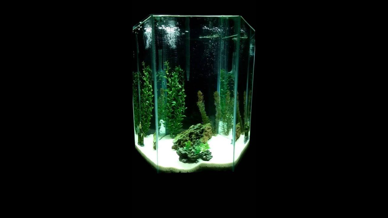 hexagon aquarium 50 gal youtube. Black Bedroom Furniture Sets. Home Design Ideas