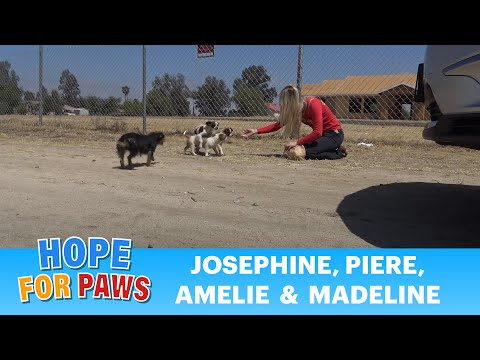 STOP DUMPING DOGS IN THE DESERT!!!  WTH is wrong with…
