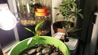 Sealed Garden update 2 ...