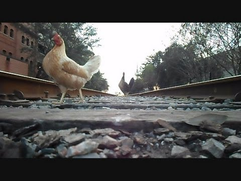 Thumbnail: Amtrak Train The Silver Star Chickens On The Tracks