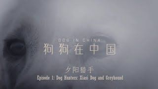 In this episode two types of hunting dogs are introduced: Xiasi Dog...