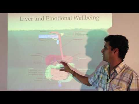 Holistic Remedies to Heal Gut, Liver, Anxiety and Depression
