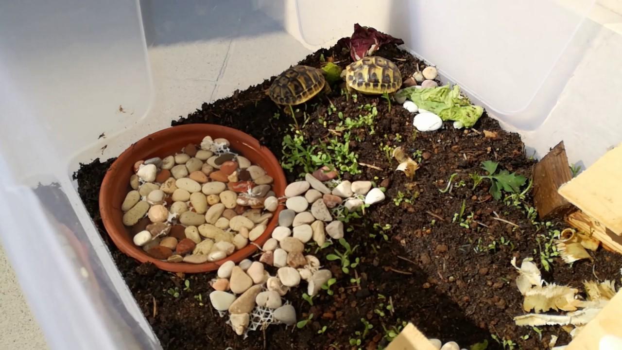 Tartarughe di terra baby hermanni youtube for Vasche di plastica per tartarughe