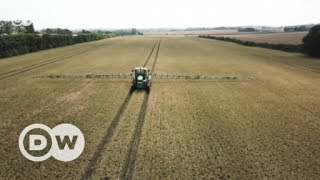 Brexit: UK farmers have mixed emotions | DW English