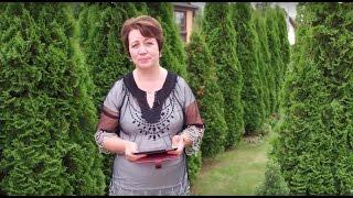 видео Комментарий к Постановлению Правительства РФ от 27.10.2015 N 1148