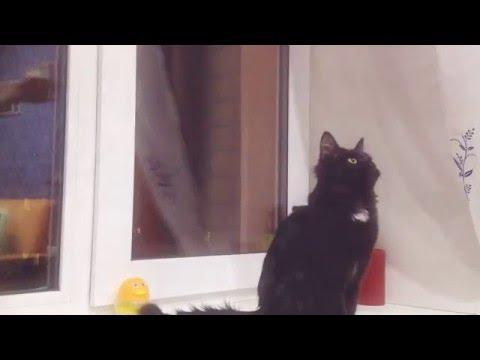 Кота рвота