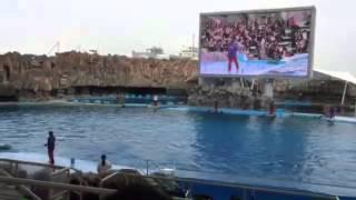 名古屋港水族館イルカショーの悲劇 thumbnail