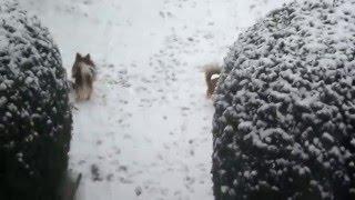 Ricky a jeho první sníh