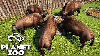 PLANET ZOO - A MANADA de BUFÁLOS!!! MUITOS ANIMAIS