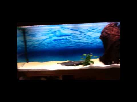 juwel rio 240 aquarium update november 8th 2010 feedin. Black Bedroom Furniture Sets. Home Design Ideas