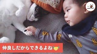 握手したい赤ちゃんと戸惑いながらも対応する猫😺👶【PECO TV】 thumbnail