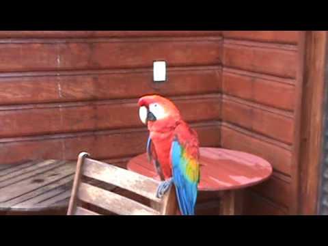 Resort cerca de Manaus - Amazonas - Brasil