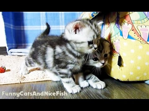 Cute Kittens Naomi and Newton  learning how to play