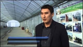 видео: Самая современная теплица в Кыргызстане