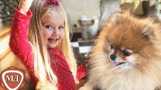 ВСЕ про МАРУСЮ! Любимица семьи Пугачевой и Галкина рыжая красавица МАРУСЯ!
