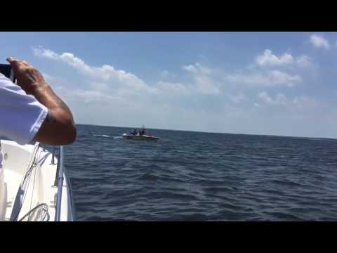 Whale Breaching right next to our boat in NJ BAY (other view)