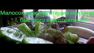 Огурцы хрустящие малосольные быстрого приготовления. ТРИ быстрых способа засолки огурцов
