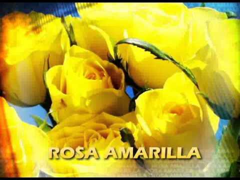 Significados Rosa Amarilla 5 Youtube