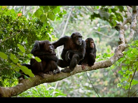 Gombe National Park
