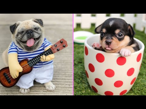 💗Aww - Cutest puppies Compilation 2019 🔴 - animals hater try not to love