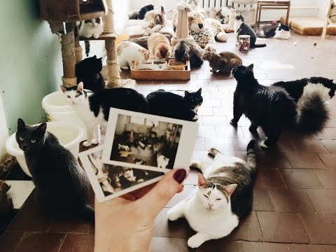 "Приют ""Территория кошек"", г.Калуга"