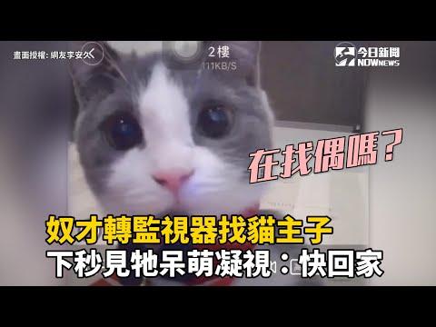 奴才轉監視器找貓主子  下秒見牠呆萌凝視:快回家