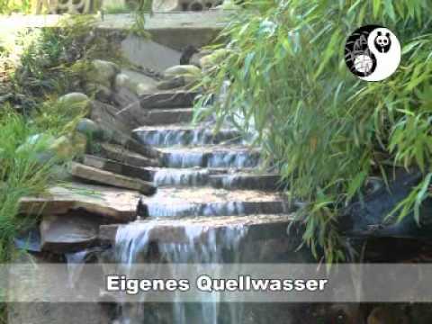 Bambuswaldde Gärtnerei Hofstetter Mühlewmv Youtube