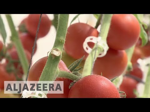 🇶🇦 Qatari farmers trying to find new ways to increase production