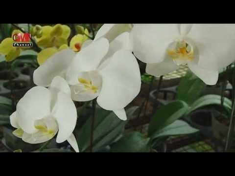 Download 95 Gambar Bunga Anggrek Gif HD Terbaik