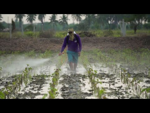 Thailand stops short of banning hazardous weedkillers