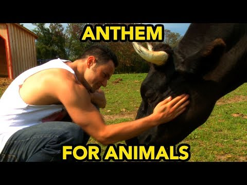 ANTHEM FOR ANIMALS | Gaia's Eye - Gaia • is • I | [OFFICIAL VIDEO]