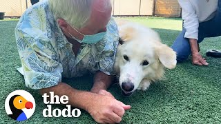 115Pound Great Pyrenees Keeps Getting Adopted And Returned Until ...  | The Dodo Adoption Day