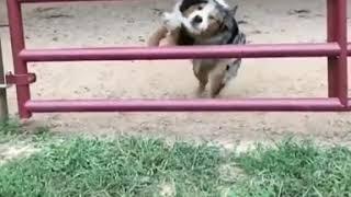 Look at the dog's slow motion through a narrow gap