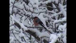 Quizz des oiseaux de mon jardin en hiver