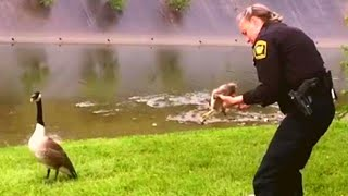 This Frantic Momma Goose Got the Attention of Two Cops. Wait Till You See Where She Led Them