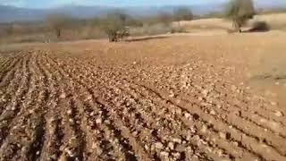 مباشرة من سوس: من قلب المغرب العميق...ناس حرثو الأراضي ولكن الجفاف