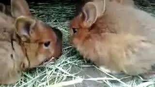 Кролики это не только быстрый секс