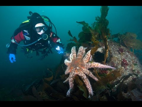 Artificial Reef Live Dive #1