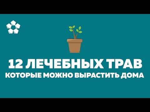 12 лекарственных трав, которые можно вырастить дома на подоконнике