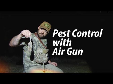 Rat Hunt with Quiet Air Rifle: Steve Criner - American Airgunner